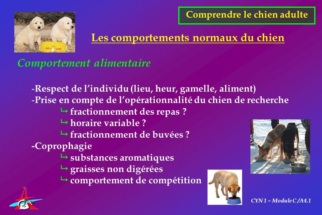 CYN 1 – Module C /A4.1 Comprendre le chien adulte Les comportements normaux du chien Comportement alimentaire - Respect de lindividu (lieu, heur, game