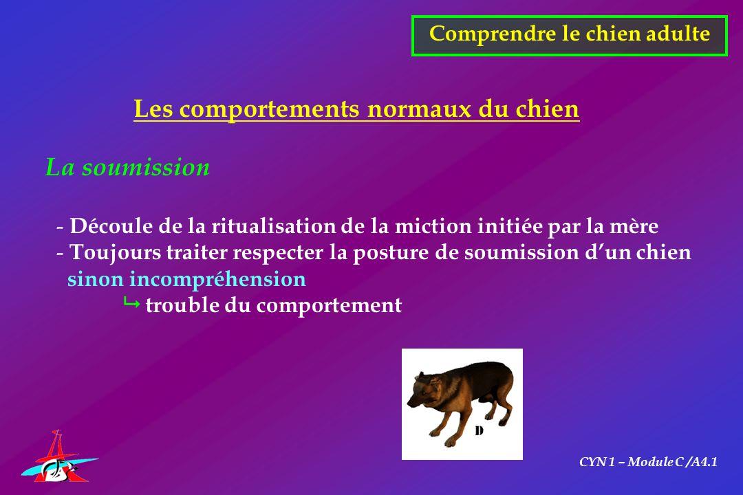 CYN 1 – Module C /A4.1 Comprendre le chien adulte Les comportements normaux du chien La soumission - Découle de la ritualisation de la miction initiée