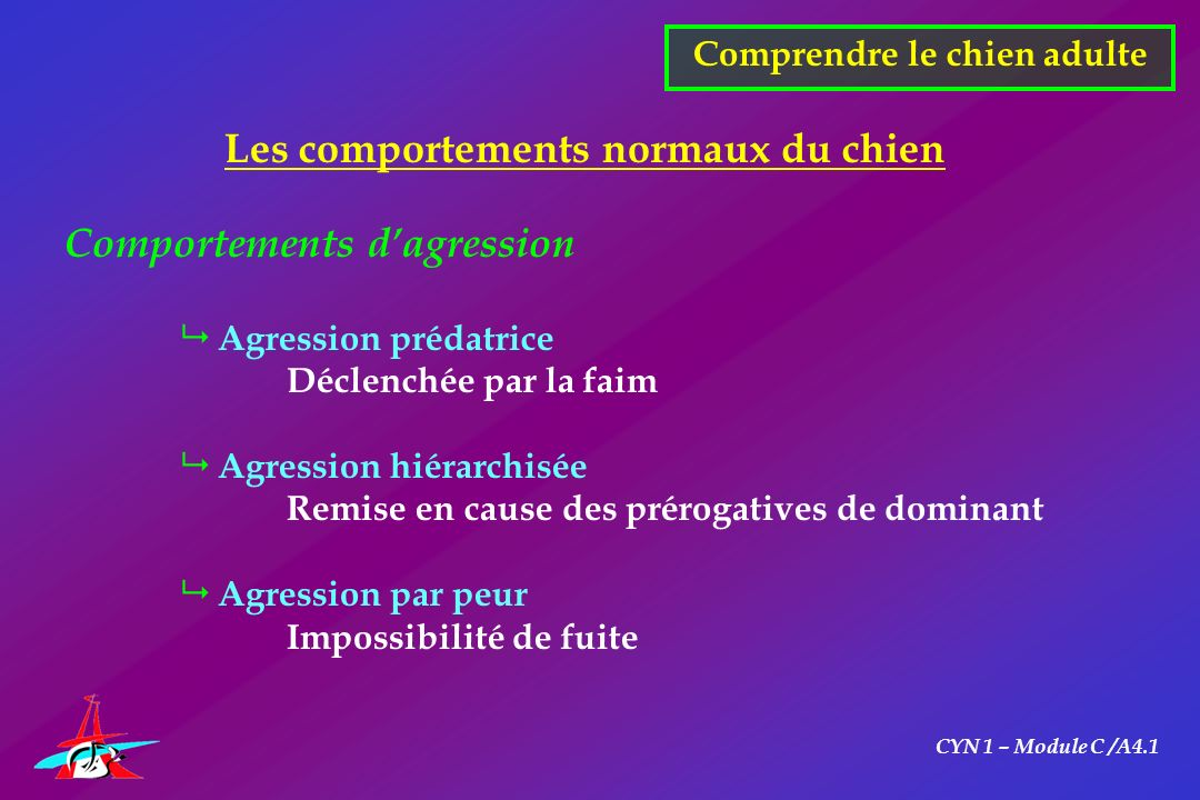 CYN 1 – Module C /A4.1 Comprendre le chien adulte Les comportements normaux du chien Comportements dagression Agression prédatrice Déclenchée par la f