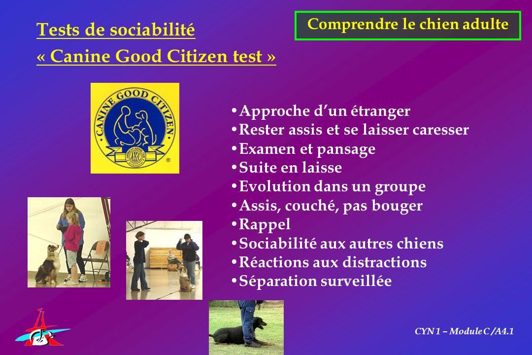 CYN 1 – Module C /A4.1 Comprendre le chien adulte Tests de sociabilité « Canine Good Citizen test » Approche dun étranger Rester assis et se laisser c