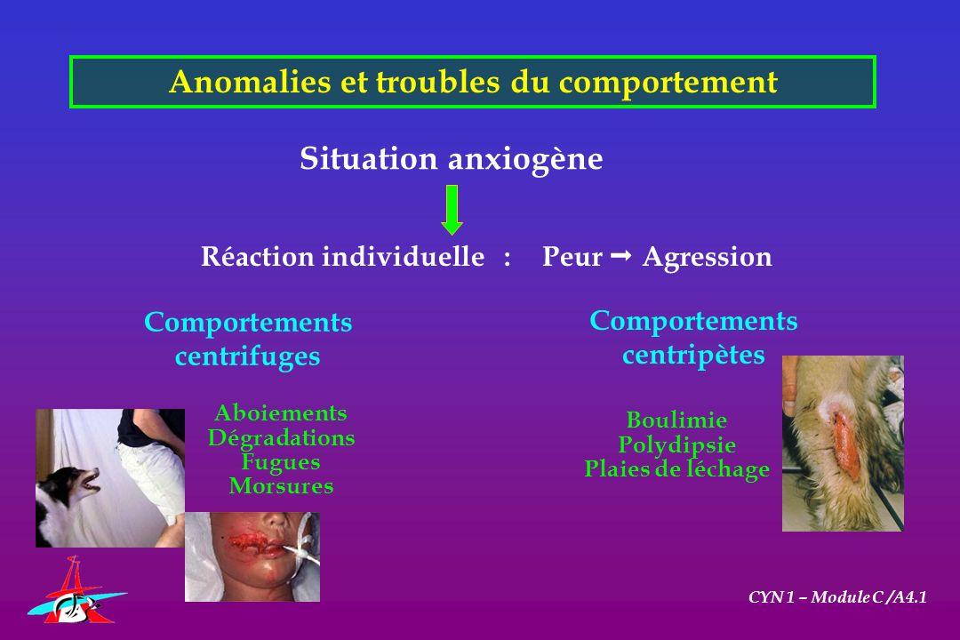 Anomalies et troubles du comportement CYN 1 – Module C /A4.1 Aboiements Dégradations Fugues Morsures Situation anxiogène Réaction individuelle :Peur A