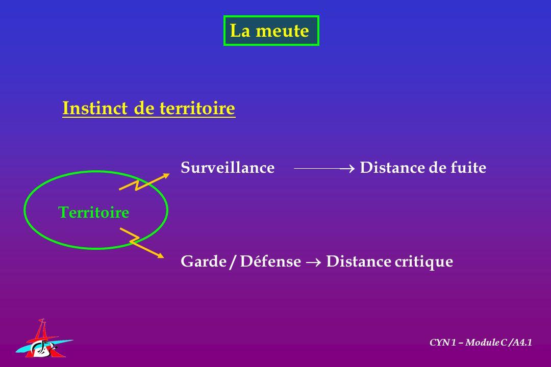 La meute CYN 1 – Module C /A4.1 Instinct de territoire Garde / Défense Distance critique Surveillance Distance de fuite Territoire
