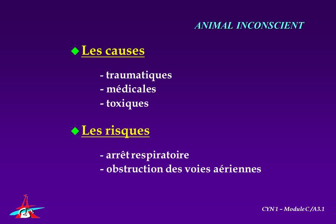 u Les causes - traumatiques - médicales - toxiques u Les risques - arrêt respiratoire - obstruction des voies aériennes ANIMAL INCONSCIENT CYN 1 – Mod