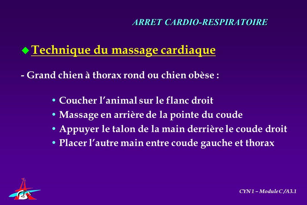 u Technique du massage cardiaque - Grand chien à thorax rond ou chien obèse : Coucher lanimal sur le flanc droit Massage en arrière de la pointe du co
