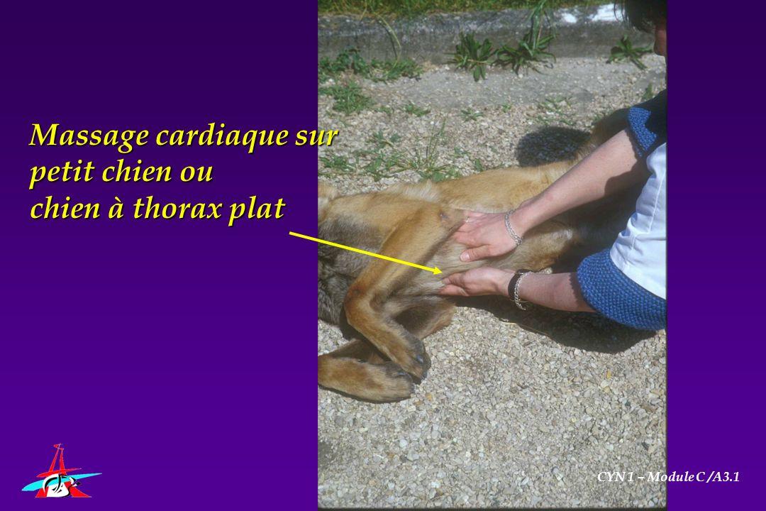 Massage cardiaque sur petit chien ou chien à thorax plat CYN 1 – Module C /A3.1
