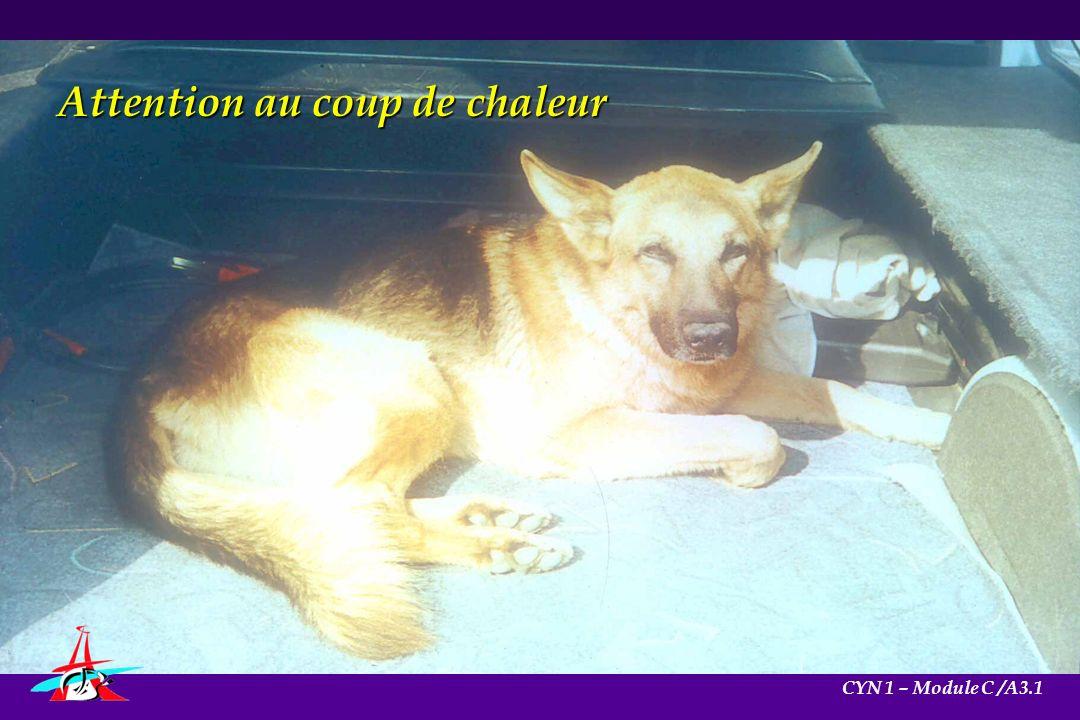 Attention au coup de chaleur CYN 1 – Module C /A3.1