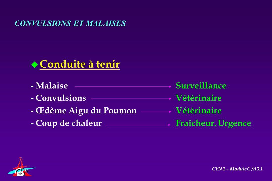 CONVULSIONS ET MALAISES u Conduite à tenir - MalaiseSurveillance - Convulsions Vétérinaire - Œdème Aigu du Poumon Vétérinaire - Coup de chaleurFraîche