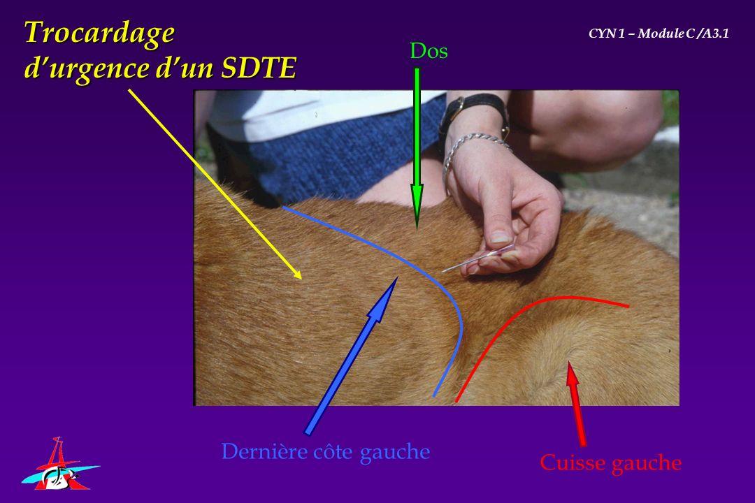 Dos Cuisse gauche Dernière côte gauche Trocardage durgence dun SDTE CYN 1 – Module C /A3.1