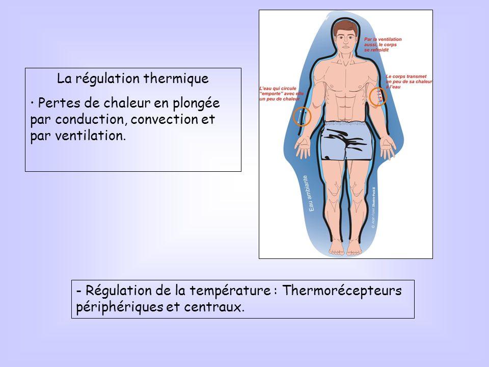 La régulation thermique Pertes de chaleur en plongée par conduction, convection et par ventilation. - Régulation de la température : Thermorécepteurs