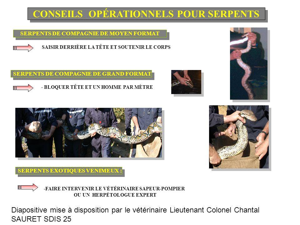 SERPENTS DE COMPAGNIE DE MOYEN FORMAT SERPENTS DE COMPAGNIE DE GRAND FORMAT SERPENTS EXOTIQUES VENIMEUX : - SAISIR DERRIÈRE LA TÊTE ET SOUTENIR LE CORPS - BLOQUER TÊTE ET UN HOMME PAR MÈTRE -FAIRE INTERVENIR LE VÉTÉRINAIRE SAPEUR-POMPIER OU UN HERPÉTOLOGUE EXPERT CONSEILS OPÉRATIONNELS POUR SERPENTS Diapositive mise à disposition par le vétérinaire Lieutenant Colonel Chantal SAURET SDIS 25