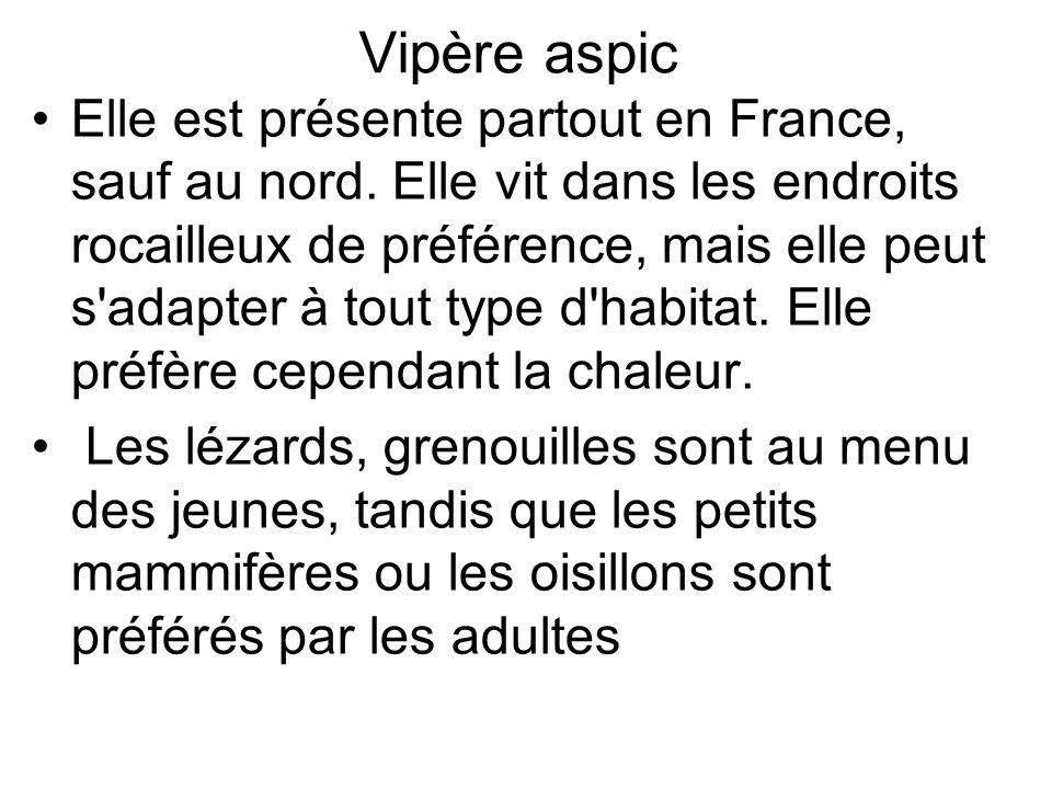 Vipère aspic Elle est présente partout en France, sauf au nord.