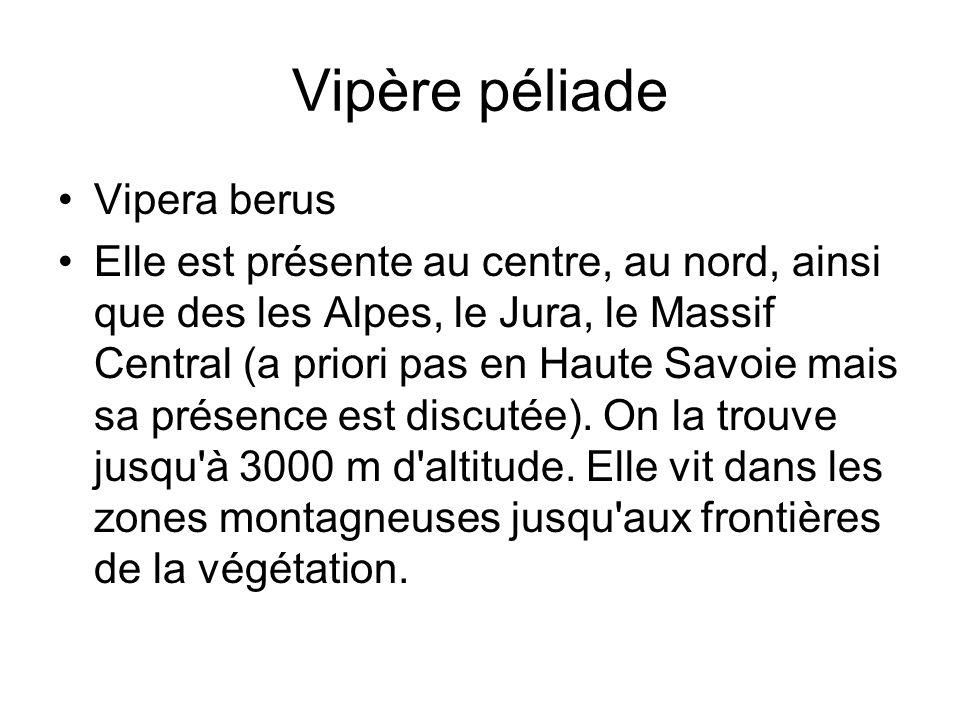 Vipère péliade Vipera berus Elle est présente au centre, au nord, ainsi que des les Alpes, le Jura, le Massif Central (a priori pas en Haute Savoie mais sa présence est discutée).