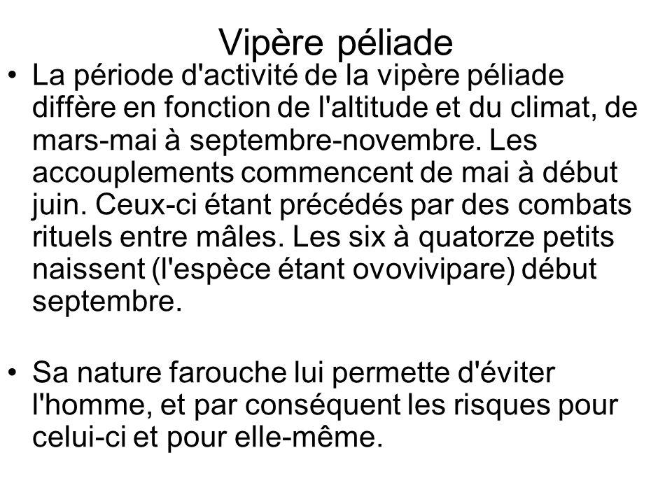 Vipère péliade La période d activité de la vipère péliade diffère en fonction de l altitude et du climat, de mars-mai à septembre-novembre.
