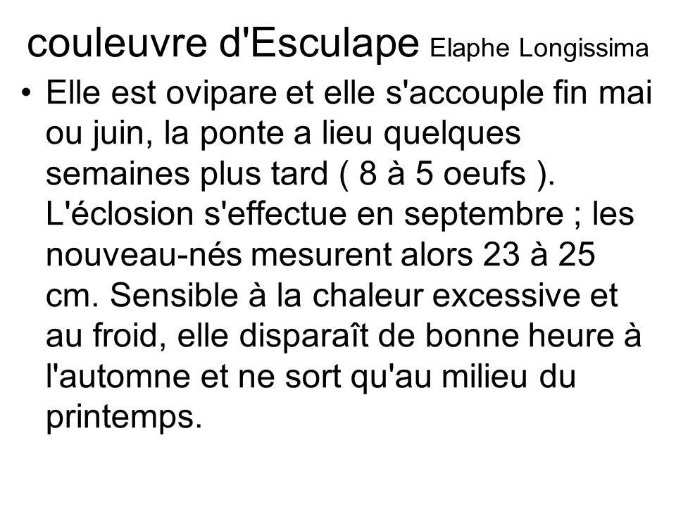 couleuvre d Esculape Elaphe Longissima Elle est ovipare et elle s accouple fin mai ou juin, la ponte a lieu quelques semaines plus tard ( 8 à 5 oeufs ).
