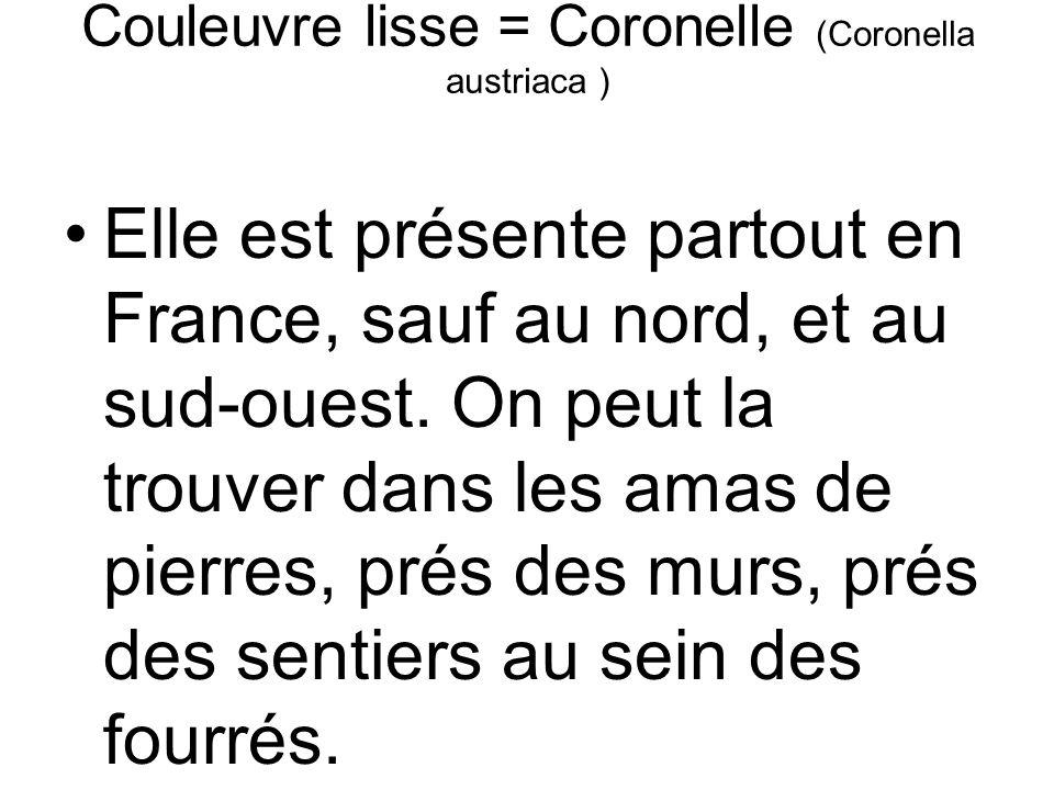 Couleuvre lisse = Coronelle (Coronella austriaca ) Elle est présente partout en France, sauf au nord, et au sud-ouest.