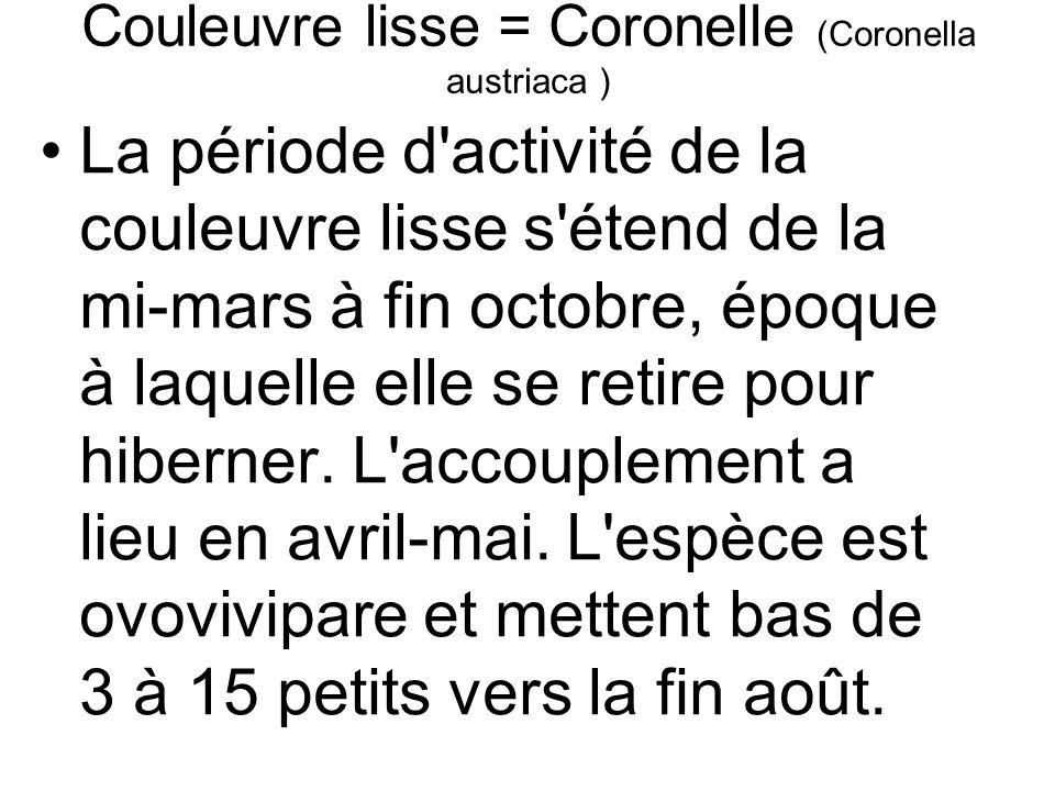 Couleuvre lisse = Coronelle (Coronella austriaca ) La période d activité de la couleuvre lisse s étend de la mi-mars à fin octobre, époque à laquelle elle se retire pour hiberner.