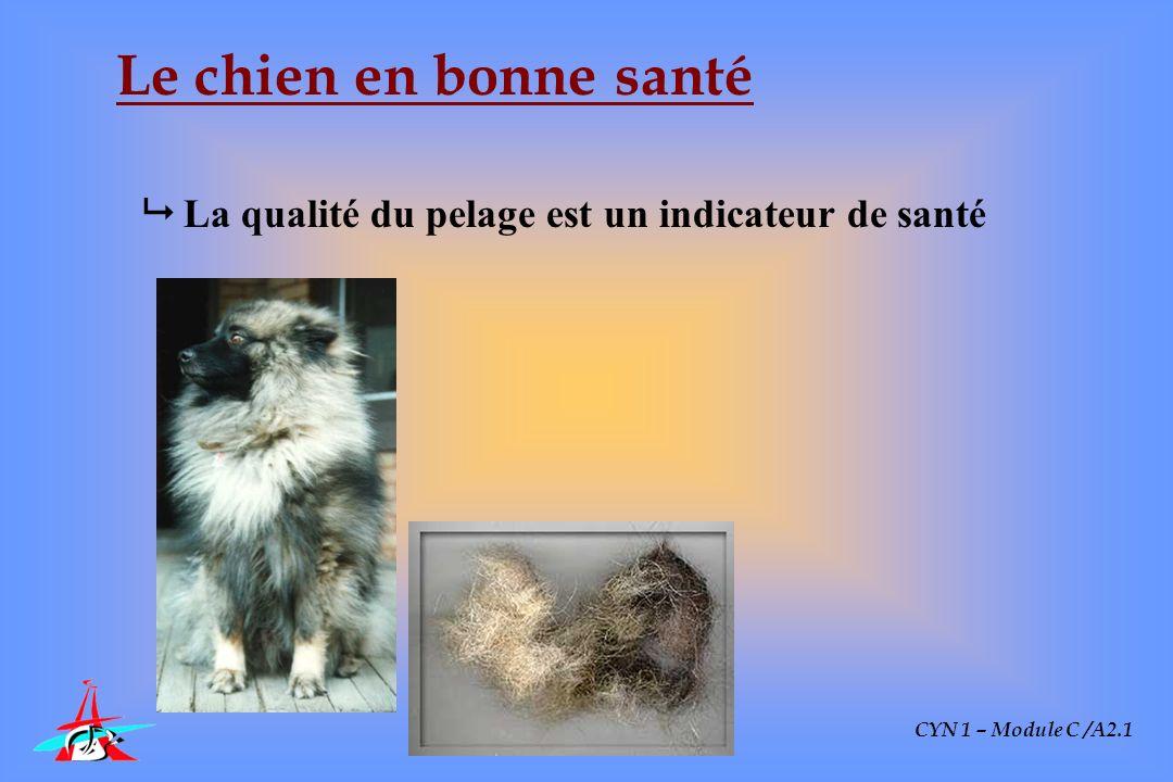 CYN 1 – Module C /A2.1 Le chien en bonne santé La qualité du pelage est un indicateur de santé