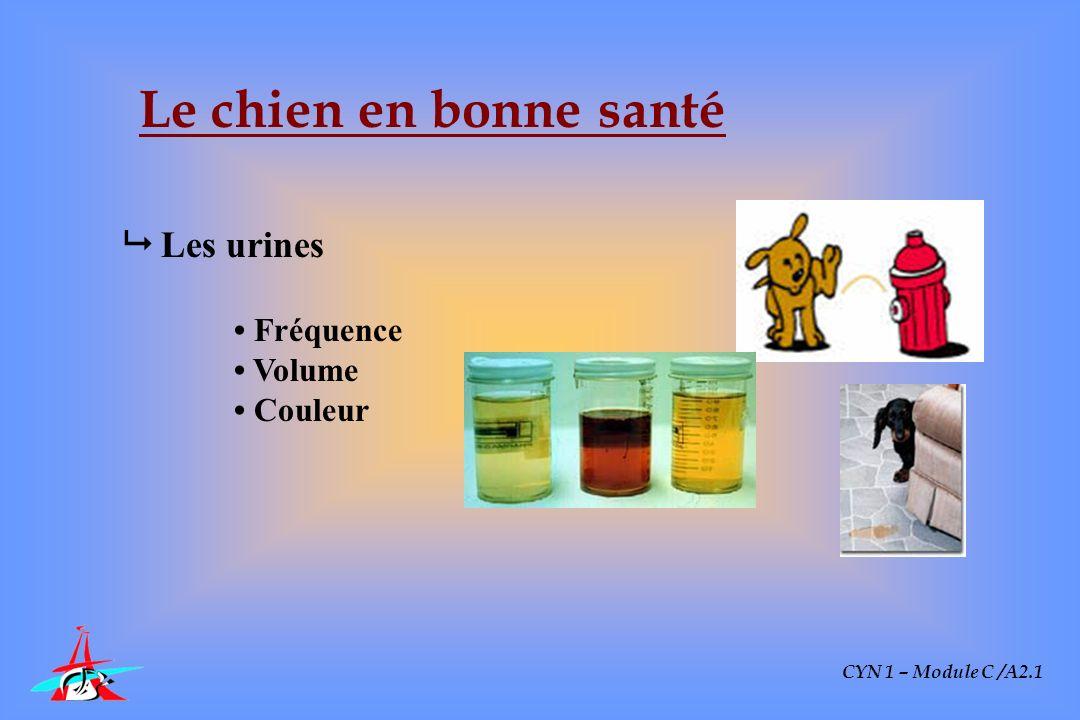 CYN 1 – Module C /A2.1 Le chien en bonne santé Les urines Fréquence Volume Couleur