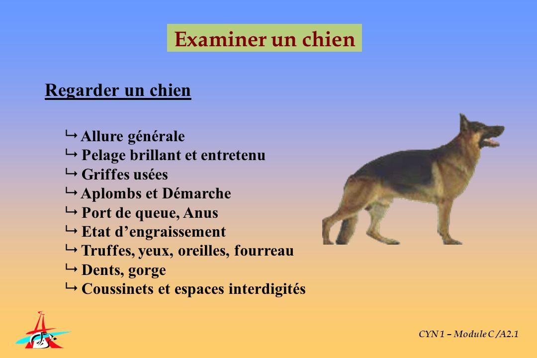 CYN 1 – Module C /A2.1 Examiner un chien Regarder un chien Allure générale Pelage brillant et entretenu Griffes usées Aplombs et Démarche Port de queu