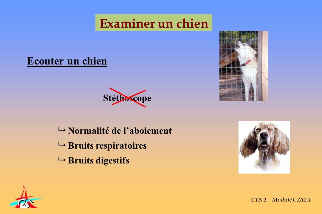 CYN 1 – Module C /A2.1 Examiner un chien Ecouter un chien Normalité de laboiement Bruits respiratoires Bruits digestifs Stéthoscope