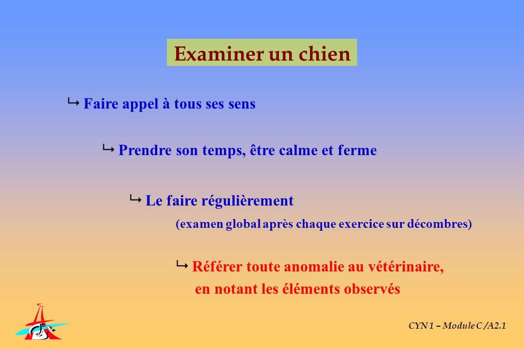 CYN 1 – Module C /A2.1 Examiner un chien Faire appel à tous ses sens Prendre son temps, être calme et ferme Le faire régulièrement (examen global aprè