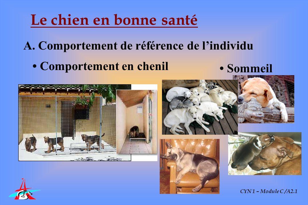 CYN 1 – Module C /A2.1 Le chien en bonne santé A. Comportement de référence de lindividu Comportement en chenil Sommeil