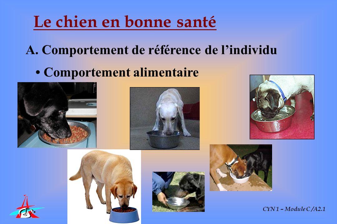 CYN 1 – Module C /A2.1 Le chien en bonne santé A. Comportement de référence de lindividu Comportement alimentaire