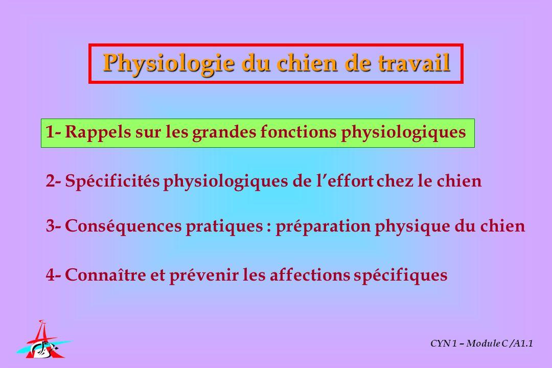 CYN 1 – Module C /A1.1 Spécificités physiologiques de leffort chez le chien Bases physiologiques de leffort chez le chien Énergétique de leffort Adaptation cardio-respiratoires Conséquences du stress Causes de la fatigue physique