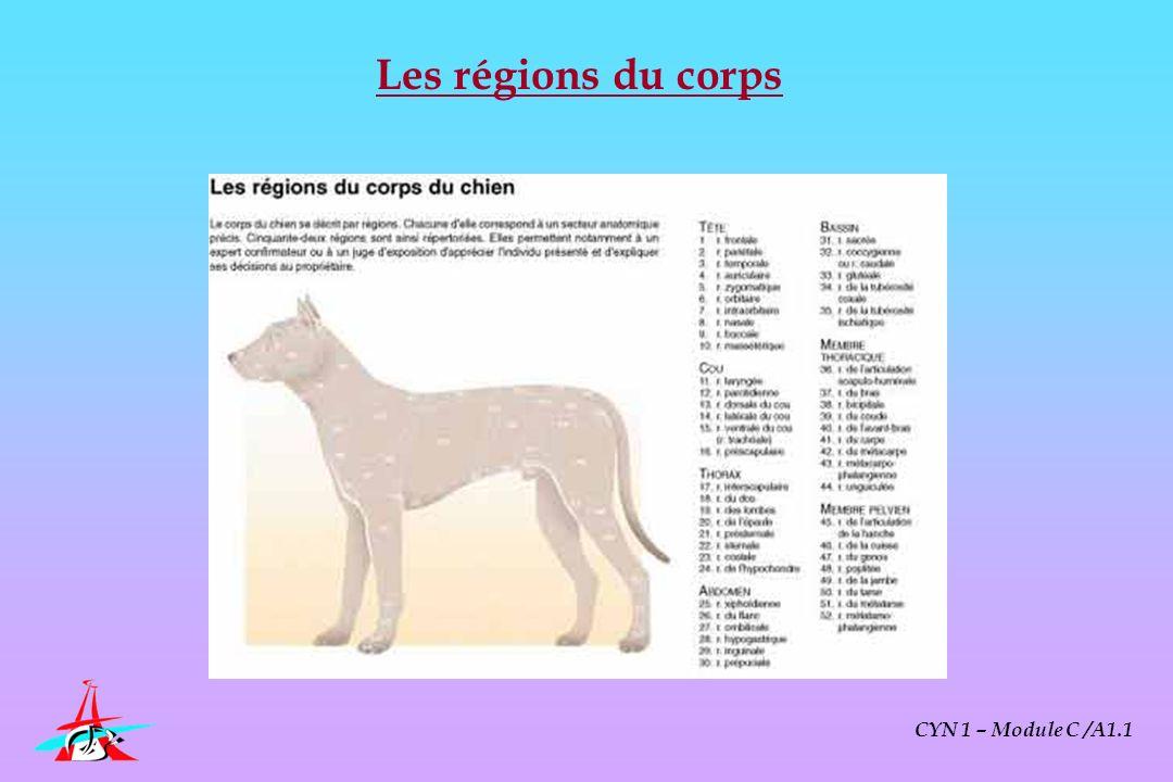 CYN 1 – Module C /A1.1 Choix de laliment Ménager Croquette (sec) Conserve (Humide) [équilibre impossible] Premium Adaptée à la taille du chien Adaptée à leffort [inadapté, cher, conservation]