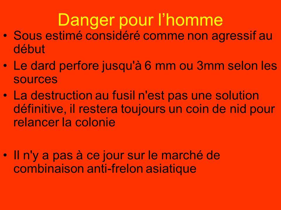 Danger pour lhomme Sous estimé considéré comme non agressif au début Le dard perfore jusqu'à 6 mm ou 3mm selon les sources La destruction au fusil n'e