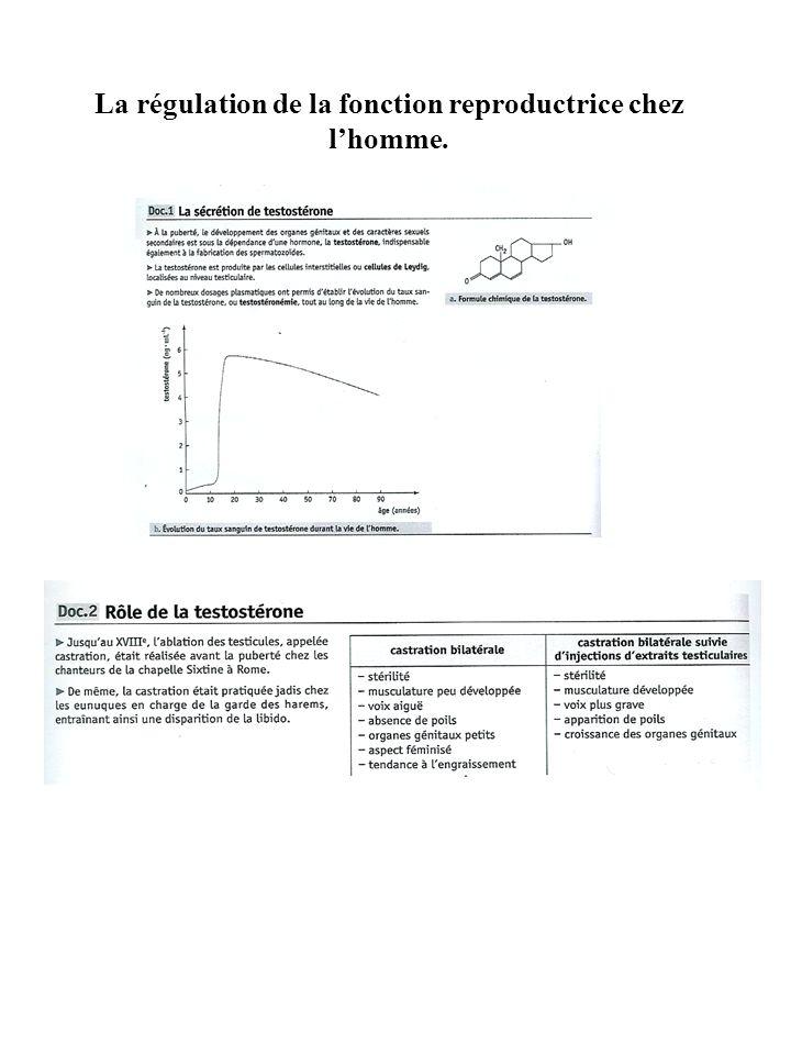 La régulation de la fonction reproductrice chez lhomme.