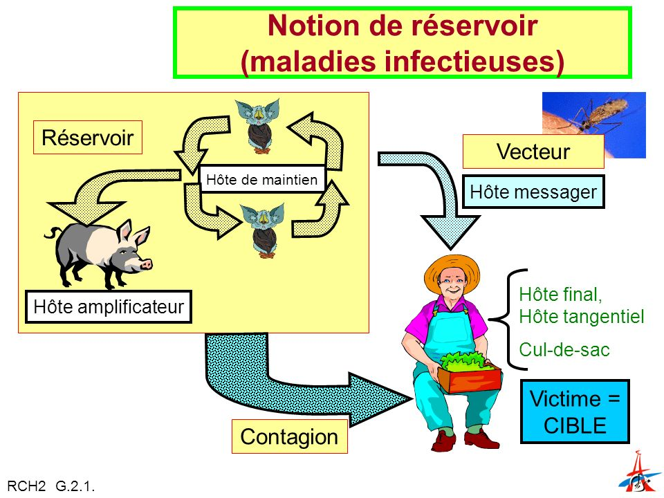 Hôte amplificateur Victime = CIBLE Hôte final, Hôte tangentiel Cul-de-sac Notion de réservoir (maladies infectieuses) Réservoir Hôte de maintien Hôte messager Vecteur Contagion RCH2 G.2.1.