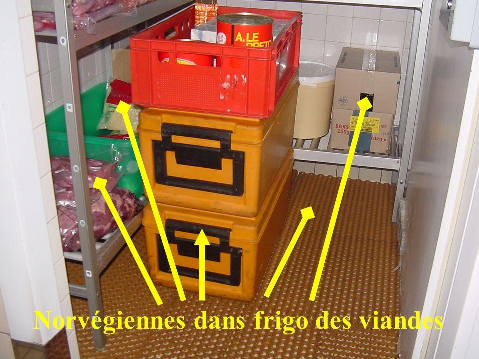 Norvégiennes dans frigo des viandes