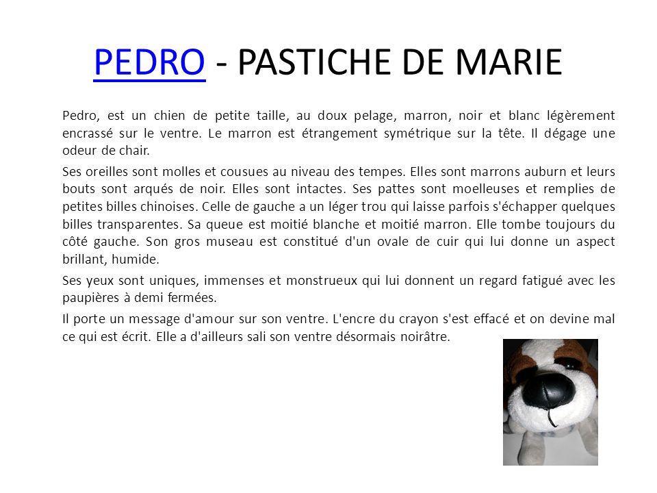 PEDROPEDRO - PASTICHE DE MARIE Pedro, est un chien de petite taille, au doux pelage, marron, noir et blanc légèrement encrassé sur le ventre. Le marro