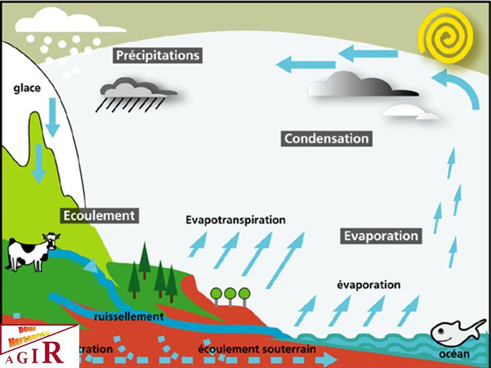 L EVAPORATION Un hectare de forêt libère chaque jour entre 20 et 50 tonnes d eau.