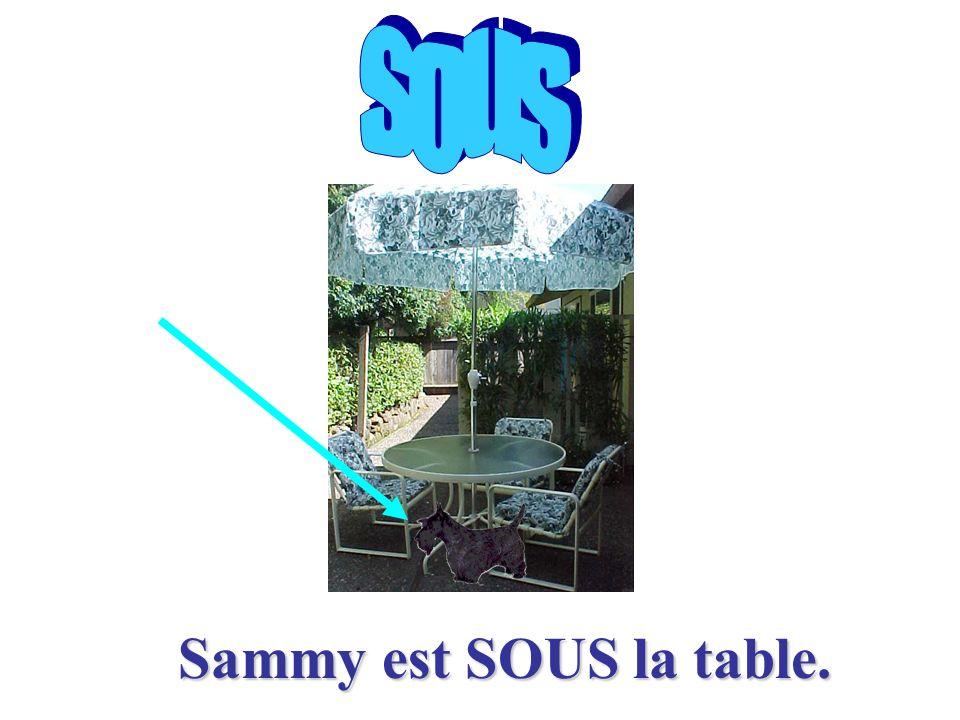 Sammy est SUR la table.Sammy est SUR la table.