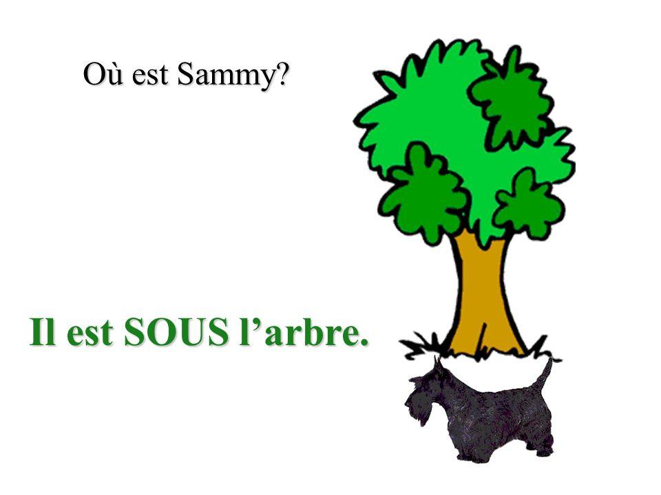 Où est Sammy? Il est SUR larbre.