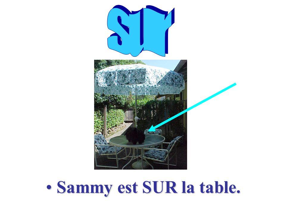 Voilà une table Mais où est Sammy