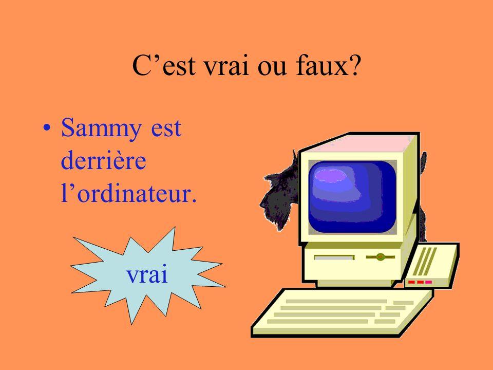 Cest vrai ou faux Sammy est sur lordinateur. vrai