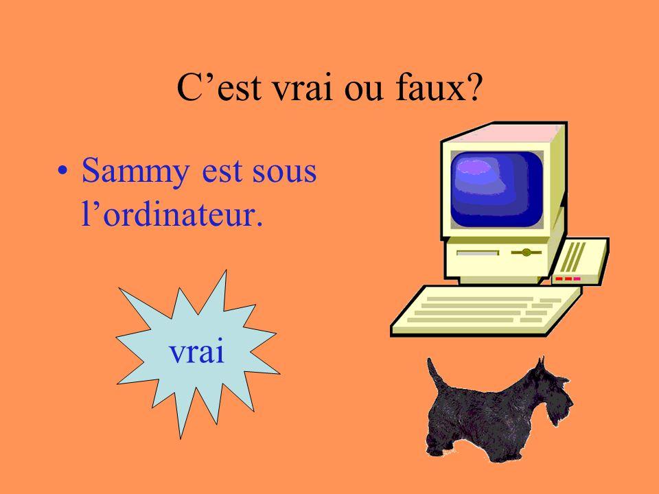 Cest vrai ou faux? Sammy est derrière lordinateur. vrai