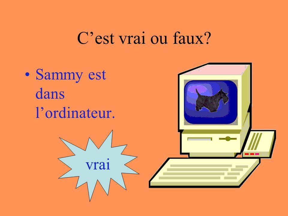 Cest vrai ou faux Sammy est sous lordinateur. vrai