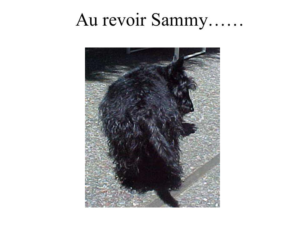 Cest vrai ou faux Sammy est dans lordinateur. vrai