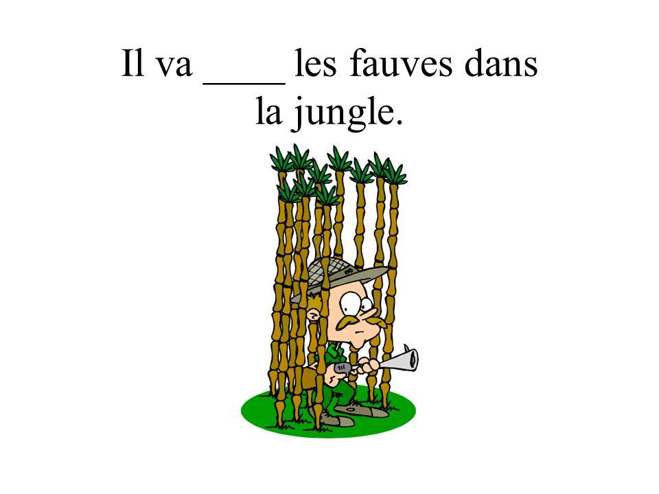 Il va ____ les fauves dans la jungle.