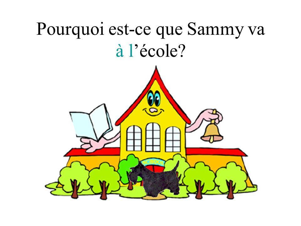Pourquoi est-ce que Sammy va à lécole?