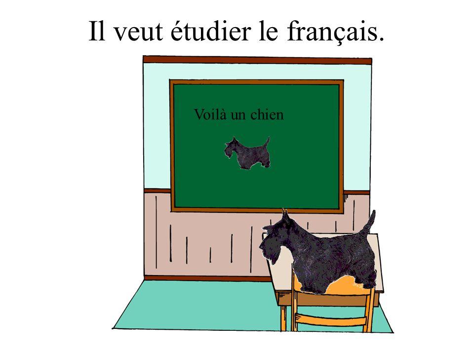 Il veut étudier le français. Voilà un chien