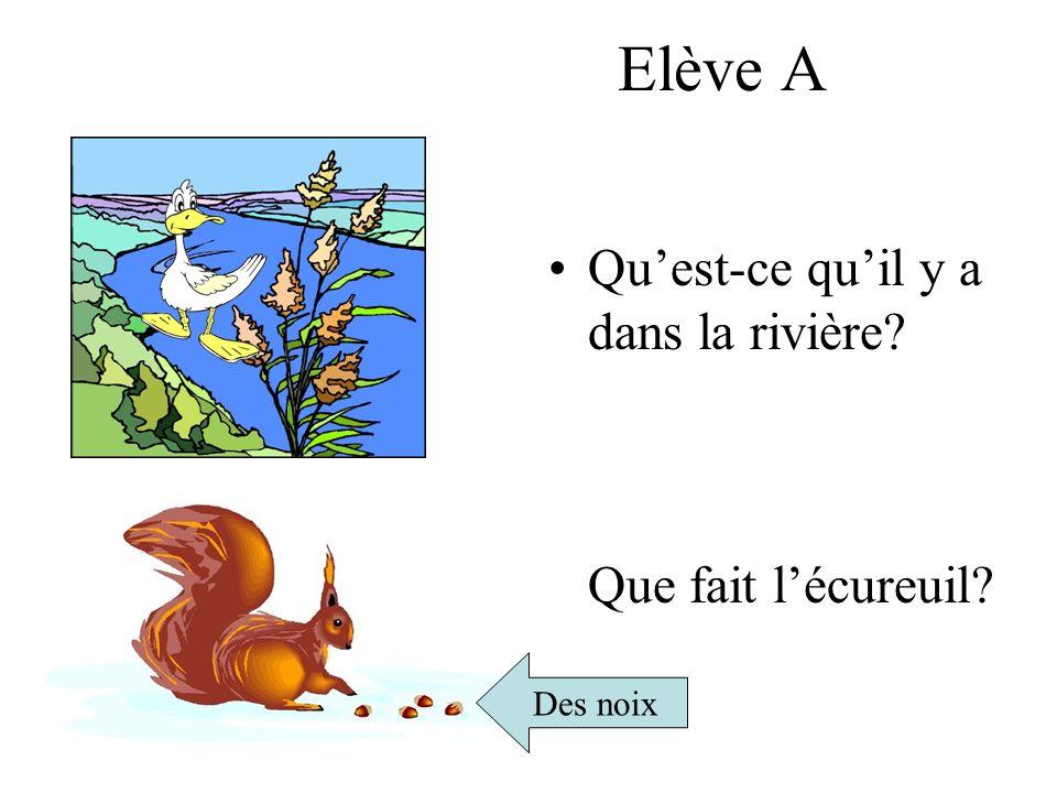 Elève A Quest-ce quil y a dans la rivière? Que fait lécureuil? Des noix