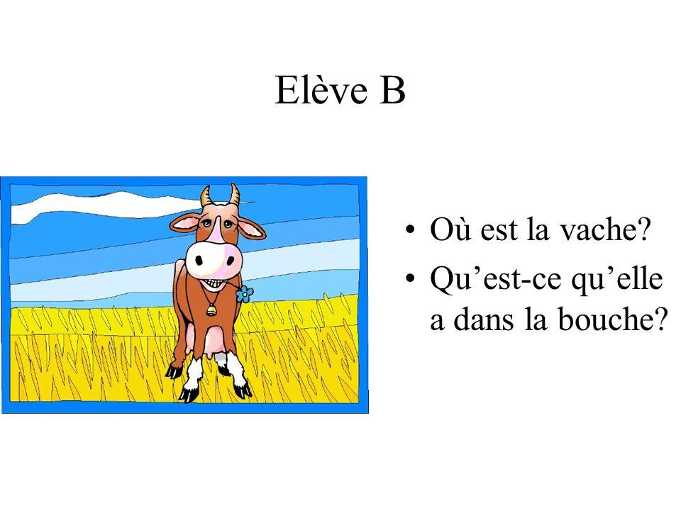 Elève B Où est la vache? Quest-ce quelle a dans la bouche?