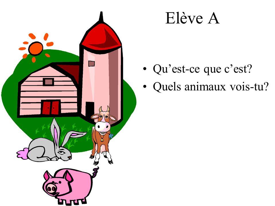 Elève A Quest-ce que cest? Quels animaux vois-tu?