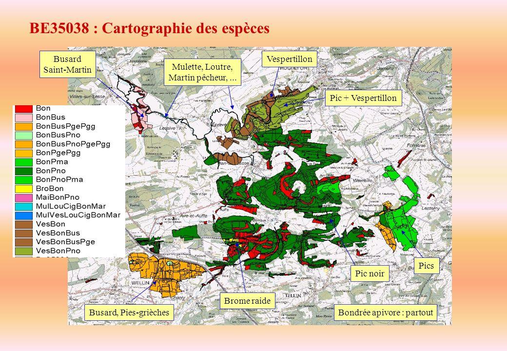 BE35038 : Cartographie des espèces Busard, Pies-grièches Pics Pic noir Vespertillon Pic + Vespertillon Mulette, Loutre, Martin pêcheur,... Busard Sain