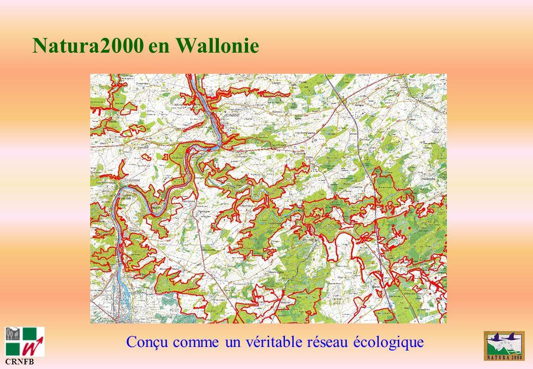 Etat davancement CRNFB Réalisation dun AD test et discussions avec les différents représentants de la société civile Discussions sur le fond des cahiers dhabitats et despèces => tableau de synthèse des mesures et organigrammes Lancement des travaux de cartographie sur 40.000 ha (mi 2005 - fin 2007) Préparation des rapports dévaluation ECD-ECF pour la CE (mi 2007) => Nombreuses discussions et explications pour sensibiliser à la Nature et « désensibiliser » à Natura2000